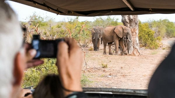 Elephants in Victoria Falls